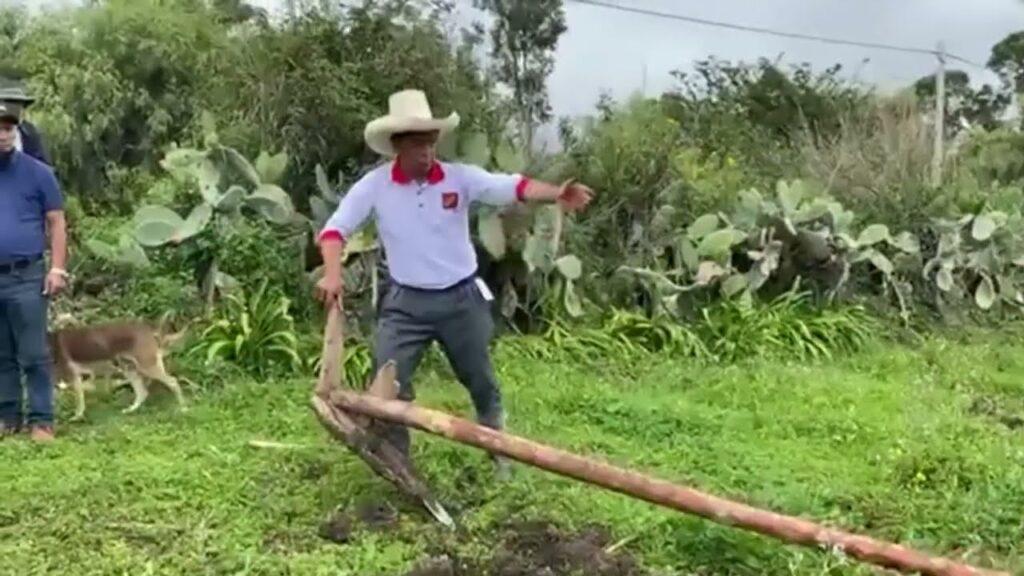 Pedro Castillo arando tierra
